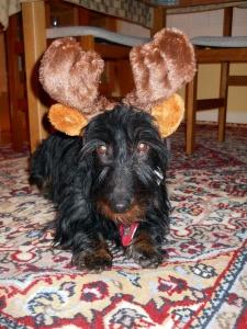 Chloe in Antlers Portrait